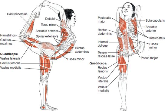 Finding and activating true core strength ompt ny for Plank muscles worked diagram